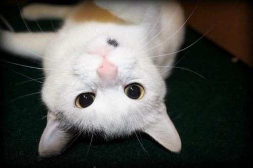Katze :3